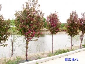 园区绿化案例