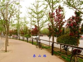 沈阳市泰山路
